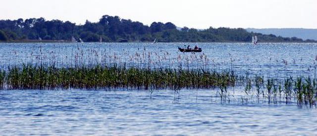 les herbes du lac
