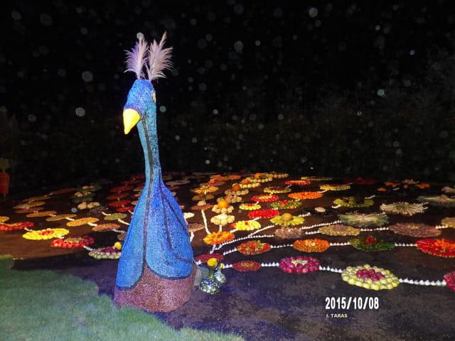 Les journées d'octobre - Le paon