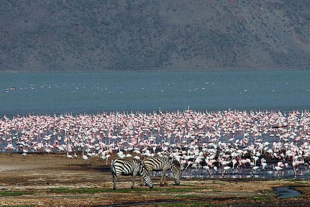 Les lacs du Grand Rift au Kenya