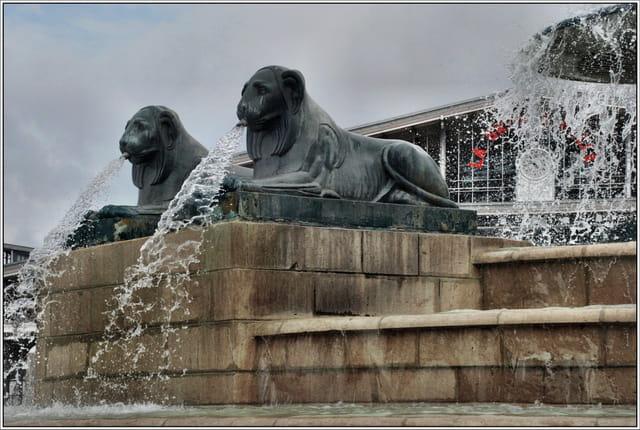 Les lionnes de la Fontaine