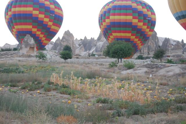 Les montgolfières dans les champs de courges