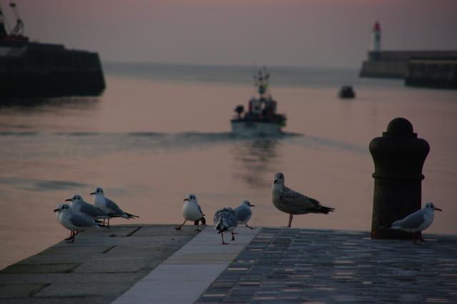 Les mouettes regardent partir le bateau de pêche