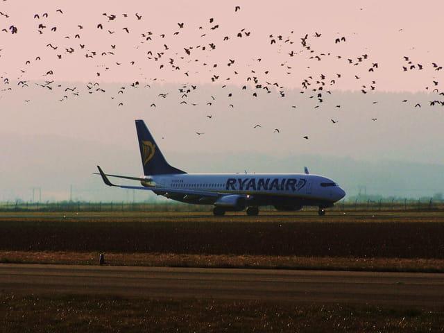 Les oiseaux.