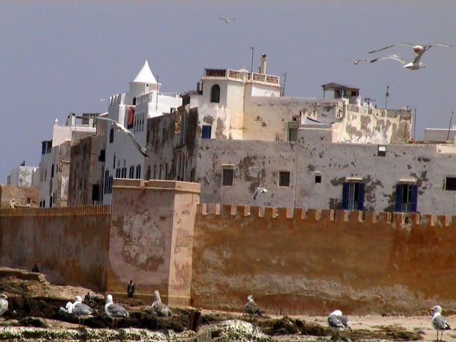 Les oiseaux d'Essaouira
