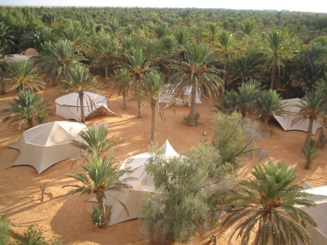 Les palmiers de l'oasis