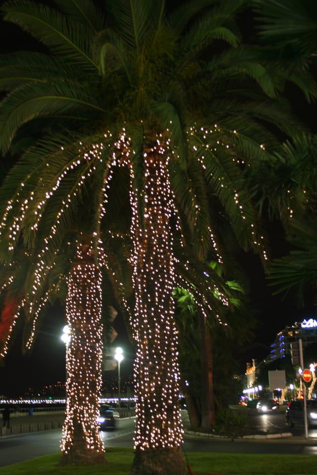 Les palmiers en habit de lumière
