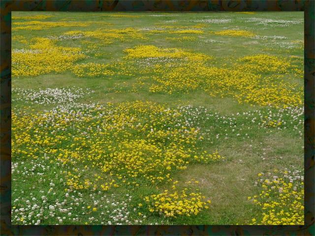 Les petites fleurs dans la prairie
