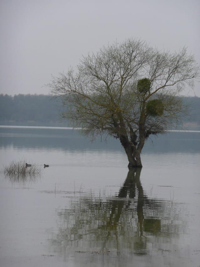 Les pieds dans l'eau du Lac