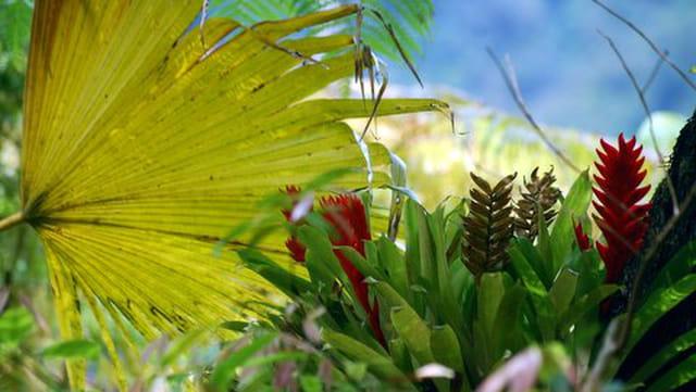 les plantes de la Maison folio