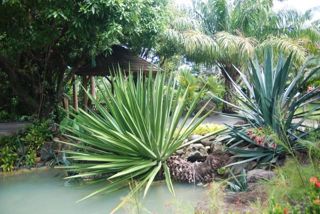 Les plantes du jardin botanique par genevieve lapoux sur l for Bd du jardin botanique