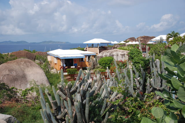 les plantes grasses de Virgin Gorda