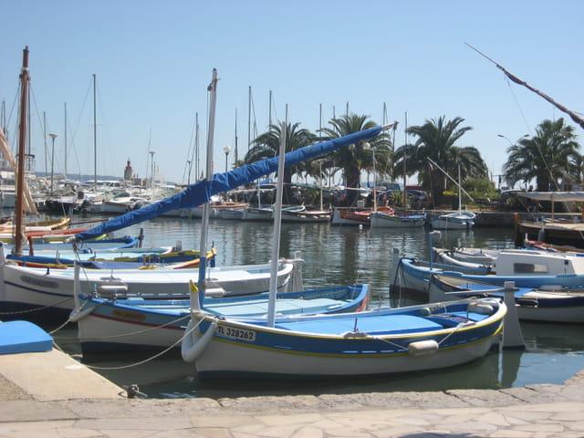 """Les """" pointus """" dans le port de Sanary"""