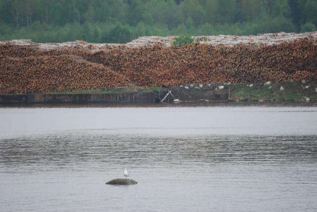 les réserves de bois le long des rivières