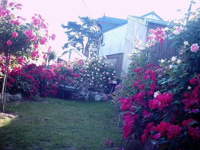 Les rose