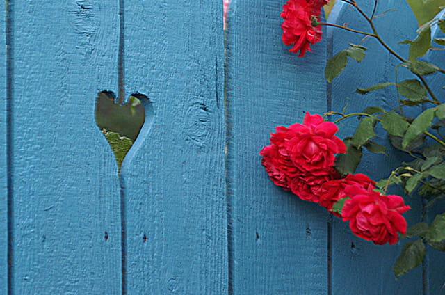 Les roses et le coeur