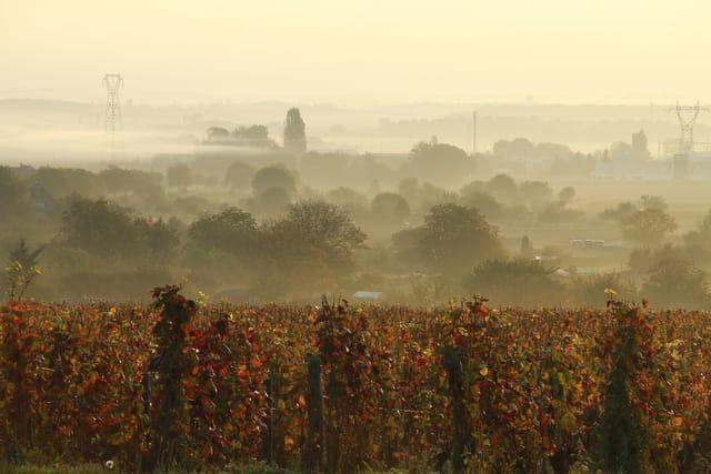 les vignes de Bourgogne par un matin brumeux