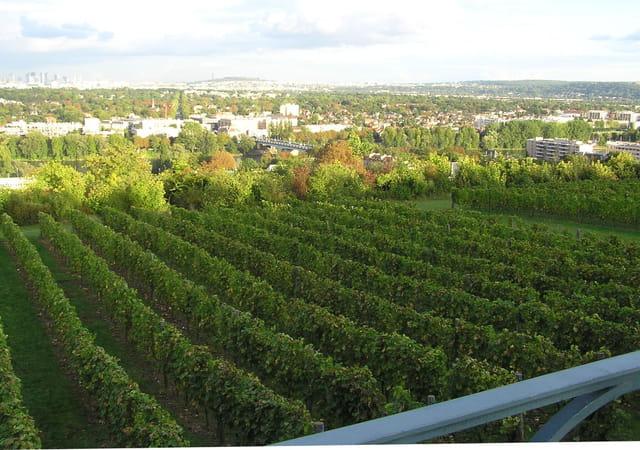 Les vins d'ile-de-france