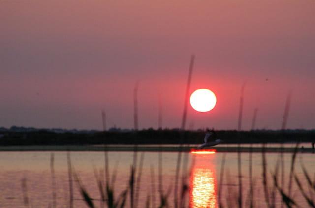 Lever de soleil sur l'étang