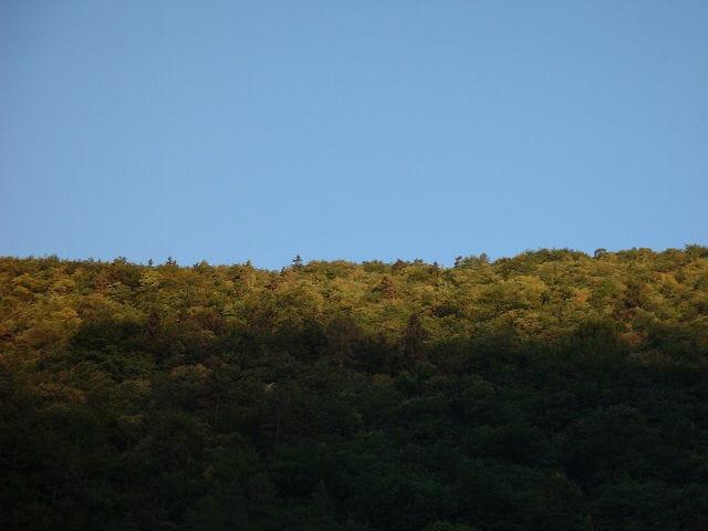 Lever de soleil sur la forêt