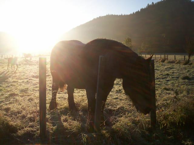 Lever du soleil sur chevaux