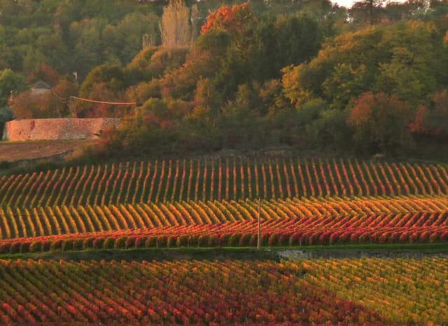Lignes et ondulations à l'automne