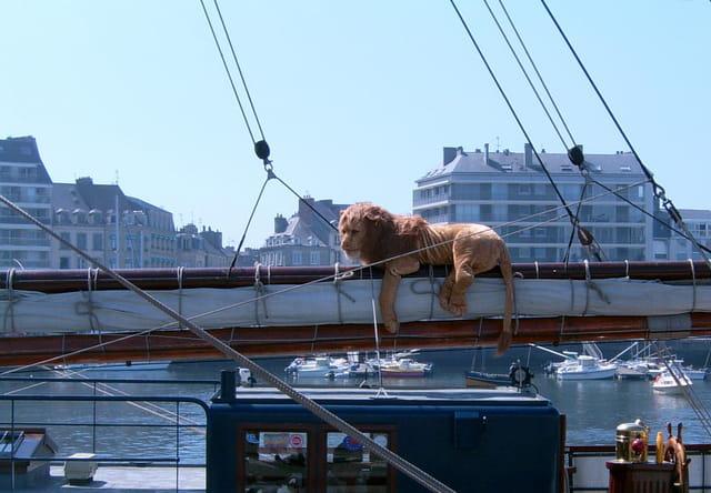 Lion perché