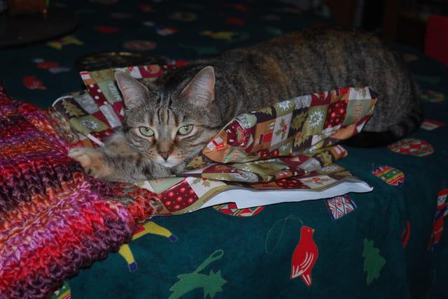 Louna veut être le cadeau de Noël