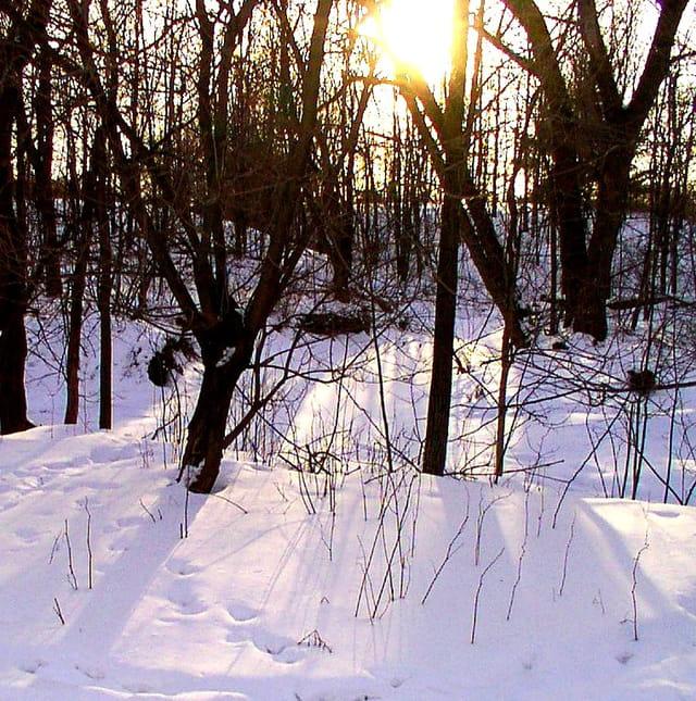 Lueur hivernale