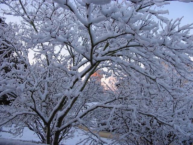 Lueur un jour de neige
