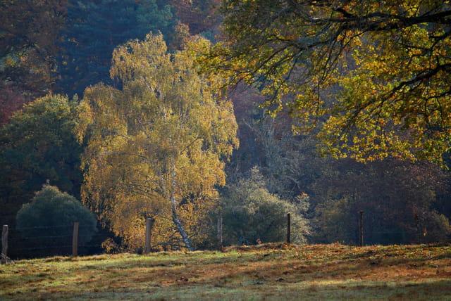 Lumière automne