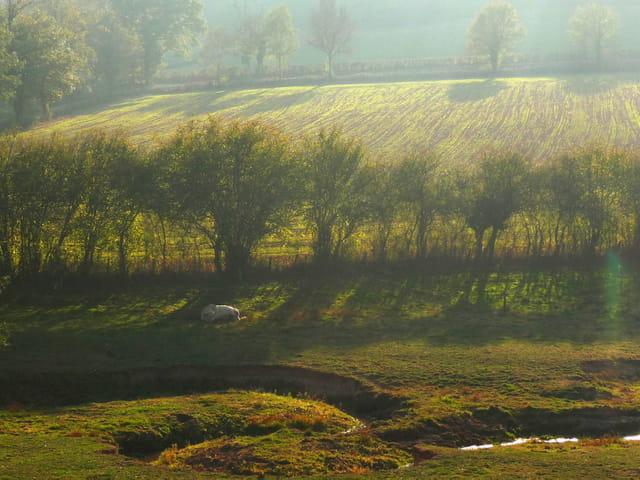 Lumière d'octobre sur la campagne