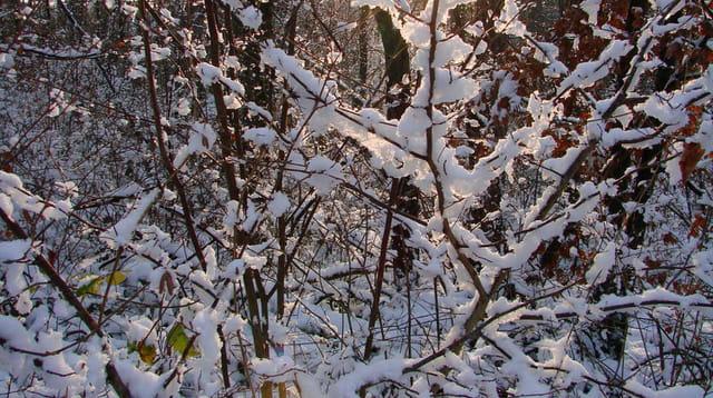 Lumière de neige