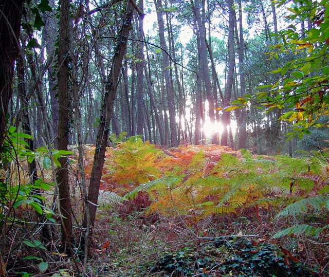 Lumière et couleurs d'automne