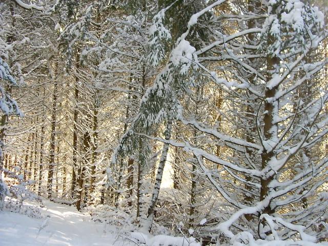lumière hivernale en sous bois