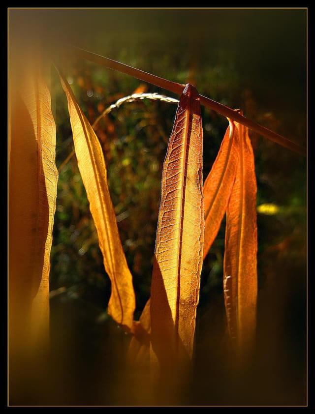 Lumière sur l'automne