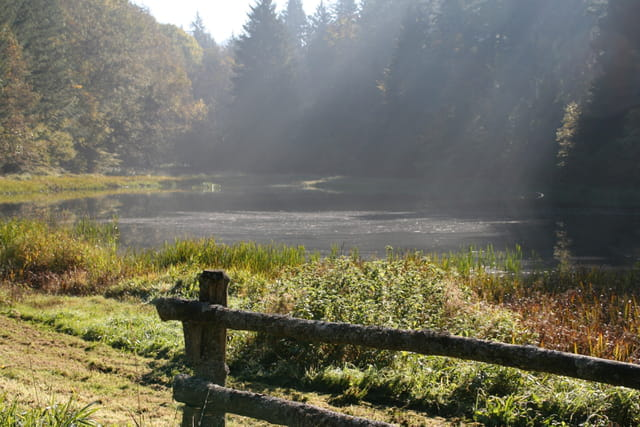 Lumière sur l'étang