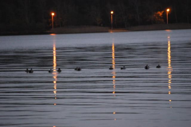lumières du soir sur le lac