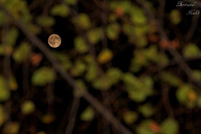 Lune de saison