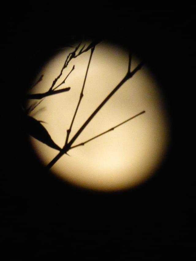 Lune japonisante