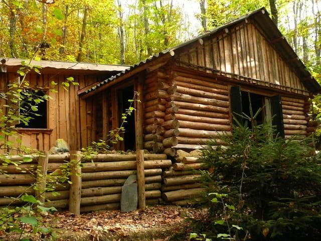 Ma cabane au fond des bois par josiane ferret sur l 39 internaute for Ma cabane en bois