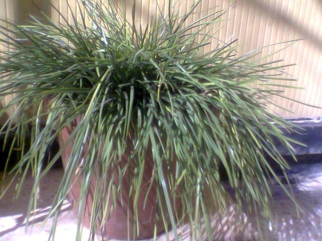 Ma plante préférée