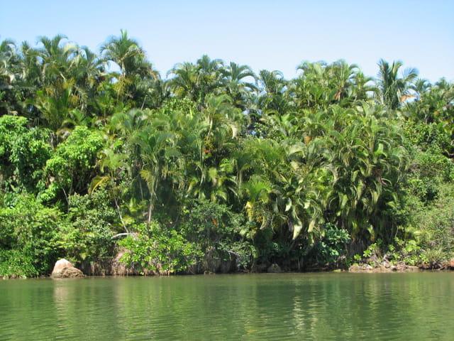 Madagascar, l'île verte