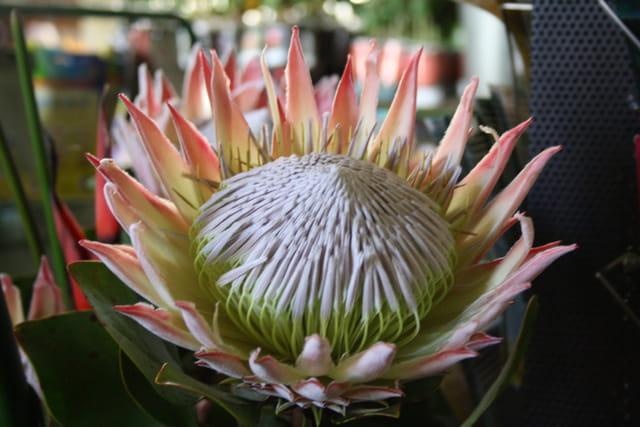 Madeire et ses fleurs