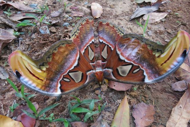 Magnifique Papillon