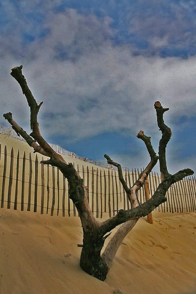 Main de squelette sortant du sable