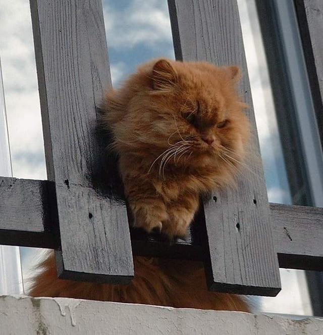 Maïs au balcon