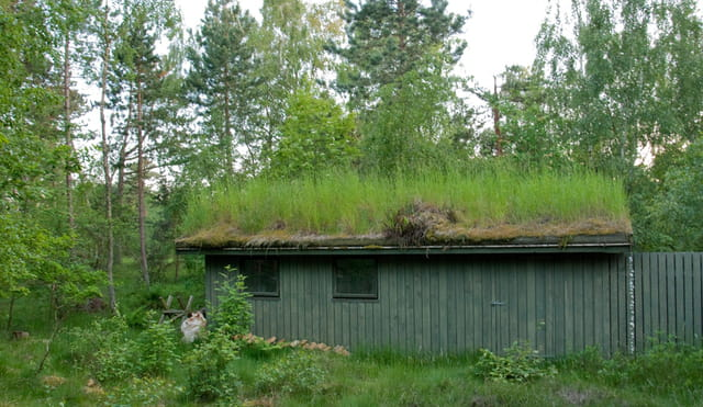 Maison danoise au toit végétal