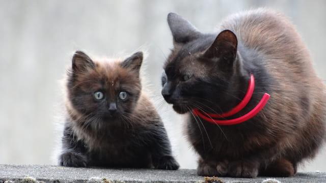 maman et chaton