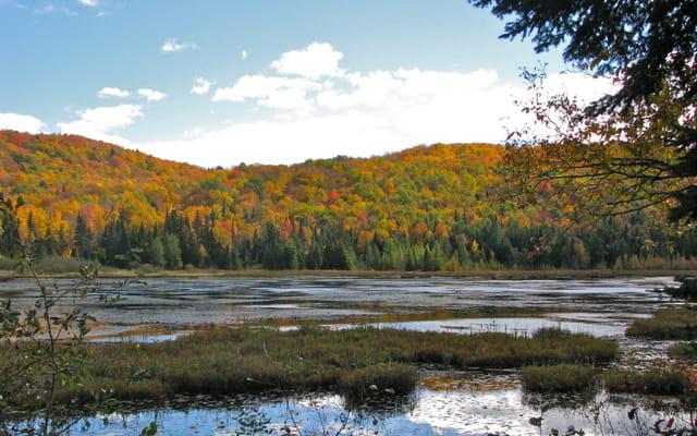 Marais d'automne