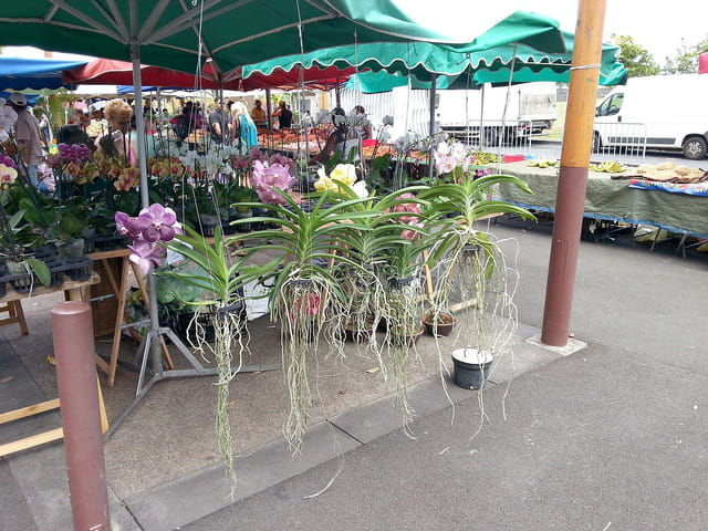 Marché et Bazar (8)